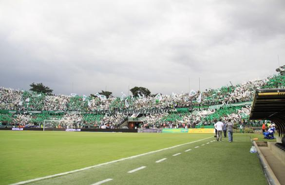 Hincha verde 2